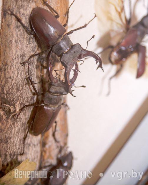 белый бриллиантовый жук насекомые и их знакомые