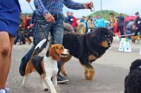 Республиканская выставка собак