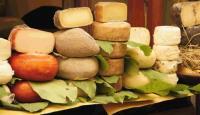VII Открытый фестиваль сыра пройдет в Гродно